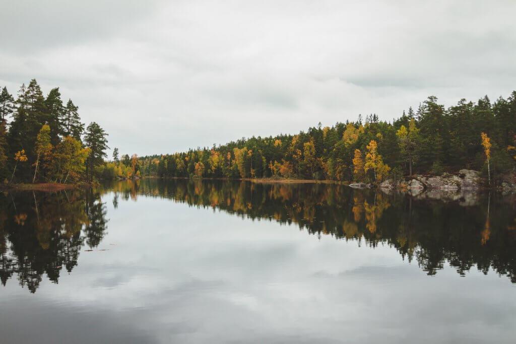 Fall trees scene
